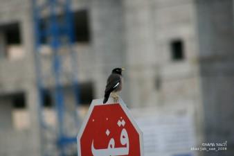 Osama_Salti_Dubai_5